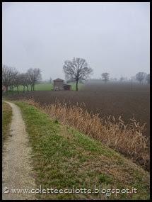 Passeggiata sull'argine dopo la piena - Padulle - 11 gennaio 2014 (27)
