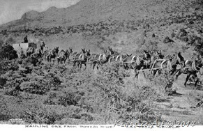 Potosi Mule Trail