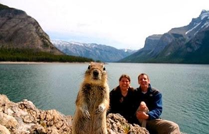 intrometido, esquilo