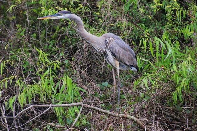Brid Everglades