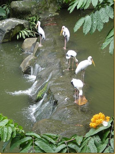 KL Birdpark