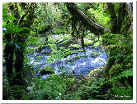 So damp and cold below the Riwaka Resurgence that moss and lichen grow everywhere.