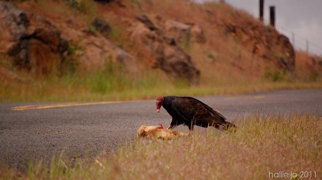 Vulture8