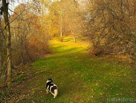 Blossom 11-14-11 Andover, MA