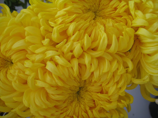 These mums were massive!