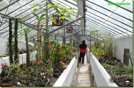 serra corsini piante grasse orto botanico roma