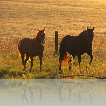 horses 071
