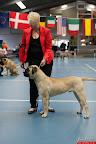 20130511-BMCN-Bullmastiff-Championship-Clubmatch-1583.jpg