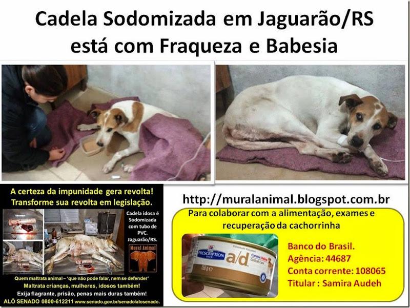 Cadela Sodomizada em Jaguarão
