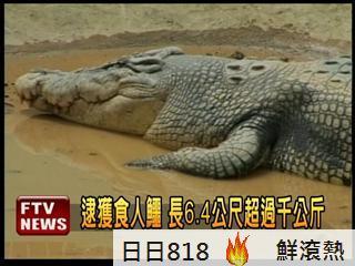 千公斤食人鱷