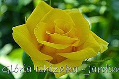 26  - Glória Ishizaka - Rosas do Jardim Botânico Nagai - Osaka