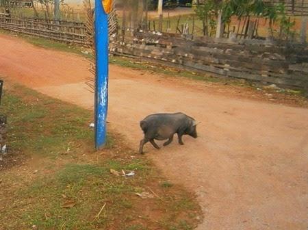 Kong Lor, Laos