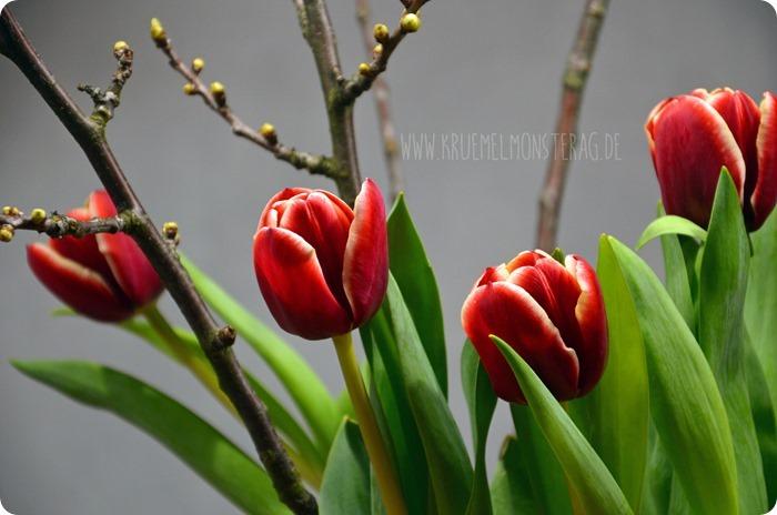 rote Tulpen (07) mit Kirschblütenzweigen am FridayFlowerday