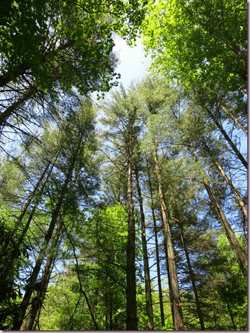 TreesUpIMG_3863