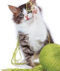 Gato-Novelo