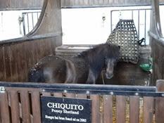 2014.05.19-082 Chiquito