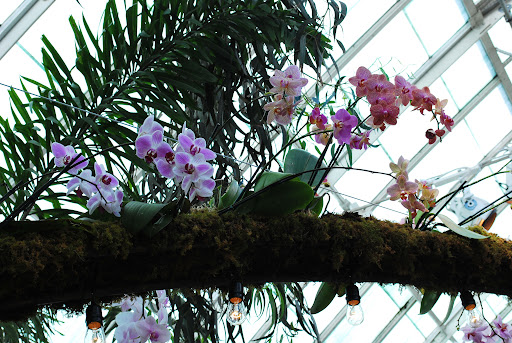 Orchids peeking from above.