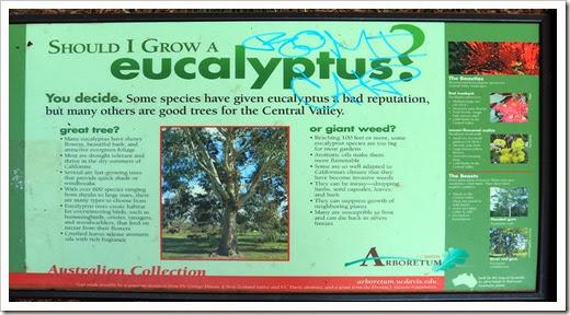 131124_UCD_Arboretum_AustralianCollection_14