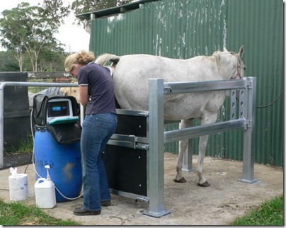 vet_scanning_horse_size_mare_invet_crush11[1]