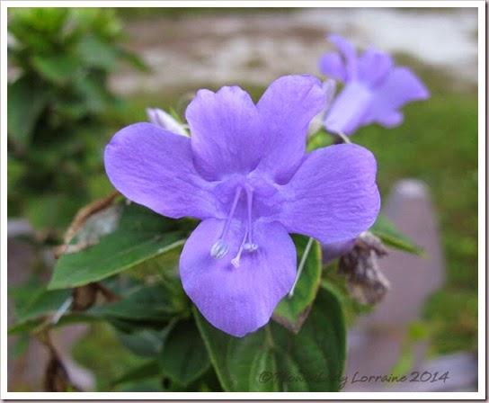 11-07-phil-violet