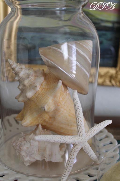 seashells 009