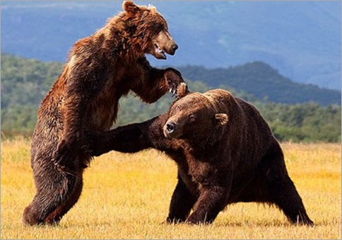 Animals-Fighting-3