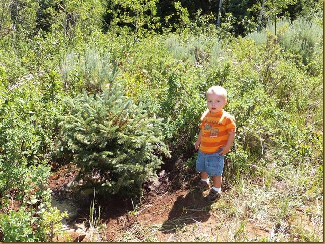 Tree planting Curtis' Tree