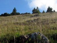 Pašniki na Belski planini