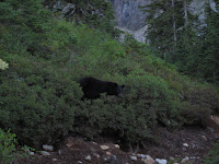 Black bear on the trail.
