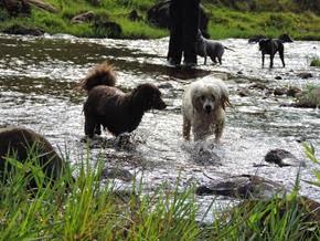 Dogs Trekking 6 (99)