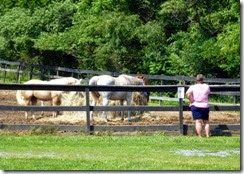 Gin talking to the horses near our site