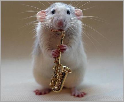 005_white_rats1-1325
