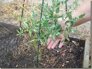 fall garden planted 006
