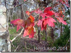 Hillsborough River State Park 005