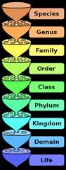 Sistem klasifikasi hewan