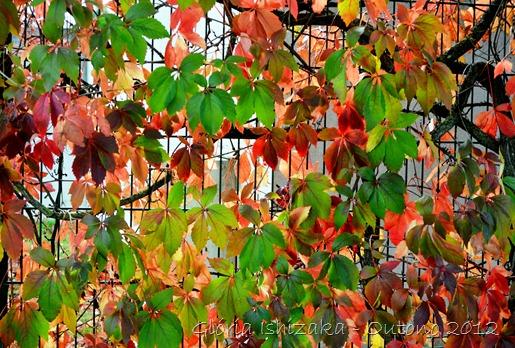Glória Ishizaka - Folhas de Outono - Portugal 30