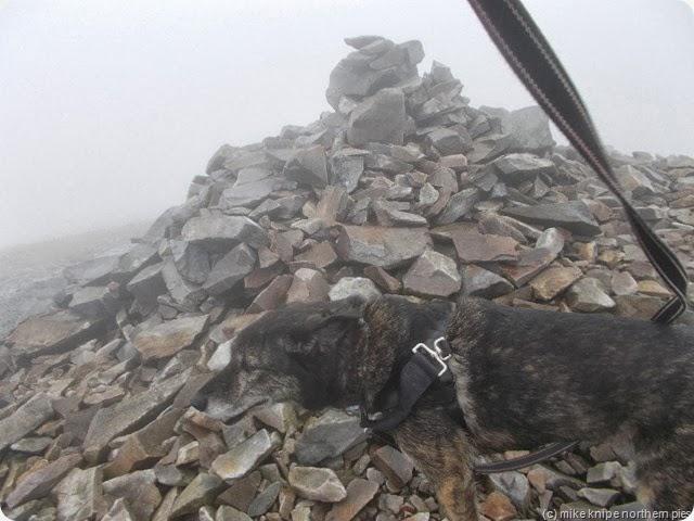 foggy summit of mynydd mawr