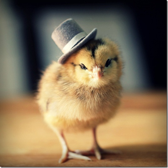 chick-in-hats-4