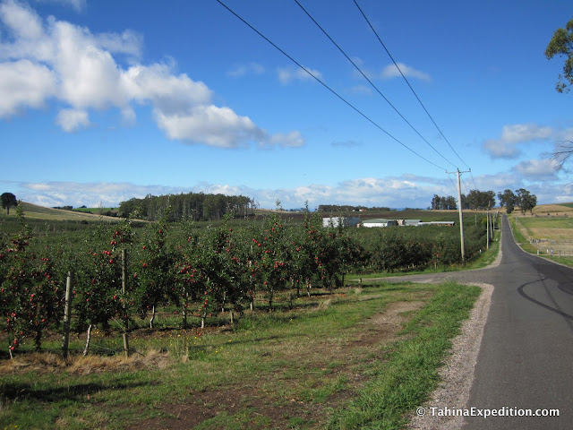 Apple orchards near the start of our drive