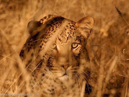 animais national geographic desbaratinando  (25)