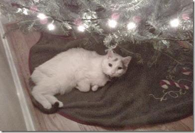 Rudy Christmas