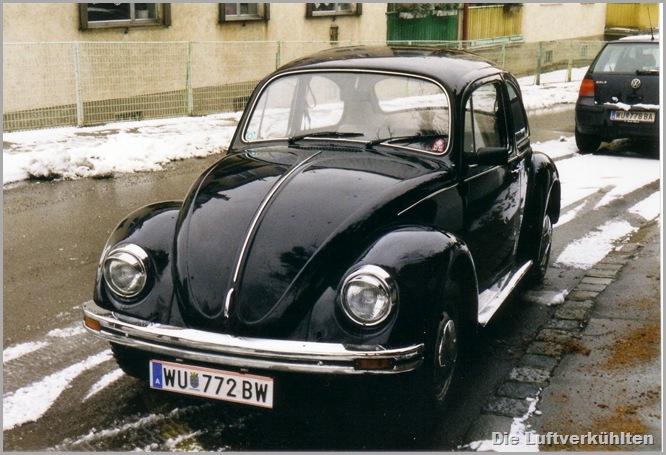 Schwarzer Käfer 2