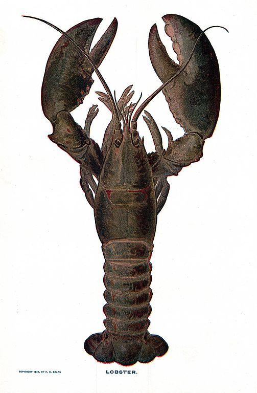 Lobster_NSRW.jpg