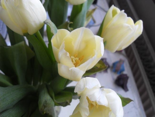 På mit bord står tulipaner