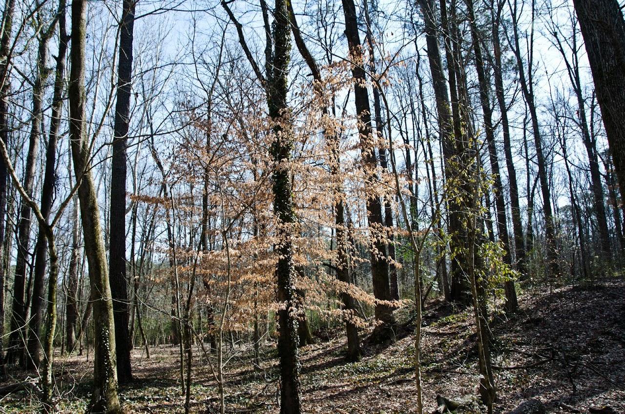 Woods at Herbert Taylor Park