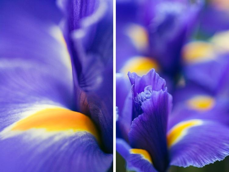 iris dip