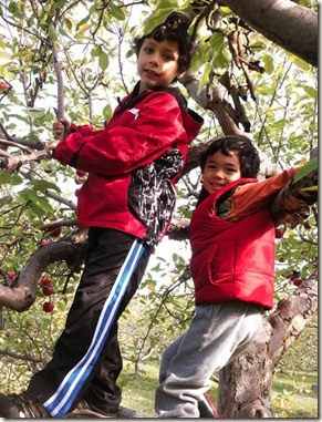 boys-in-tree