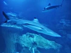2015.01.25-066 requins