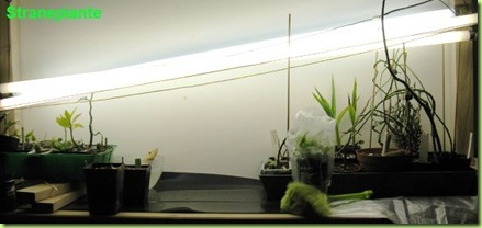 zona di semina pulita
