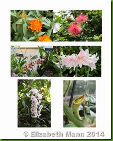 US Botanic Garden2